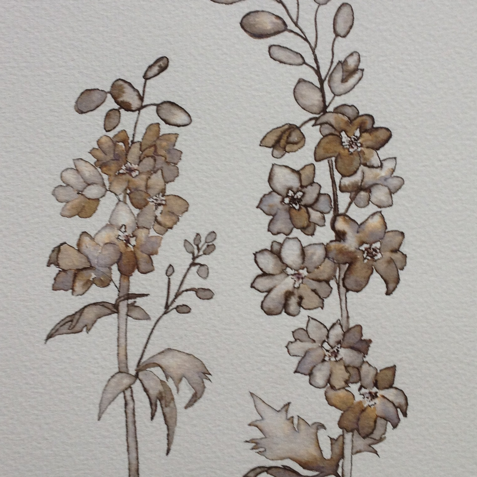 Commission Delphinium mono