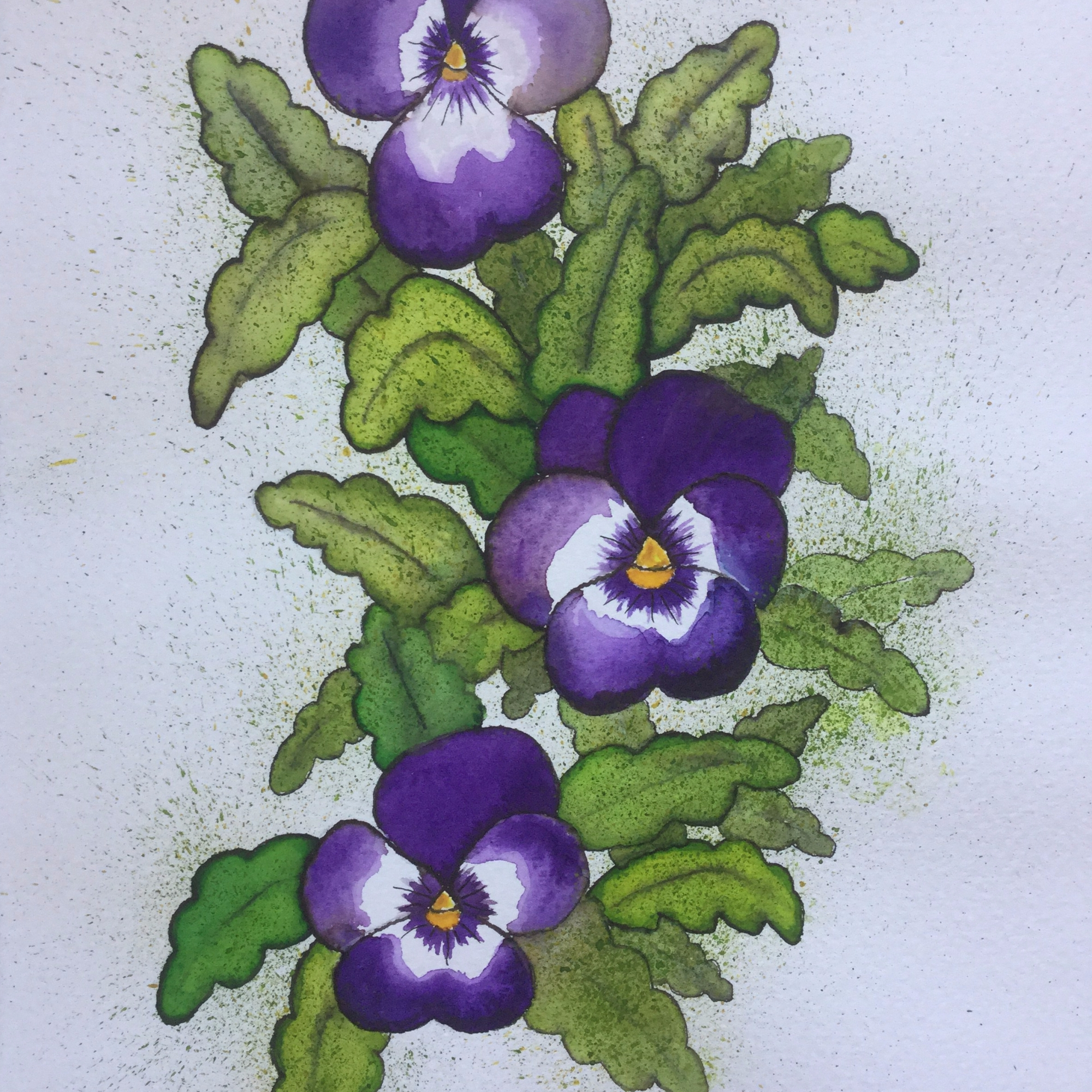 Viola Pansy