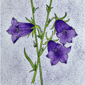 Four Daughters - Harebell