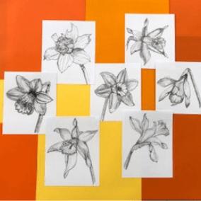 Daffodils by Siobhan Hearn