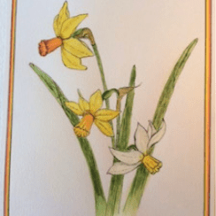 Daffodils by Angela Batten